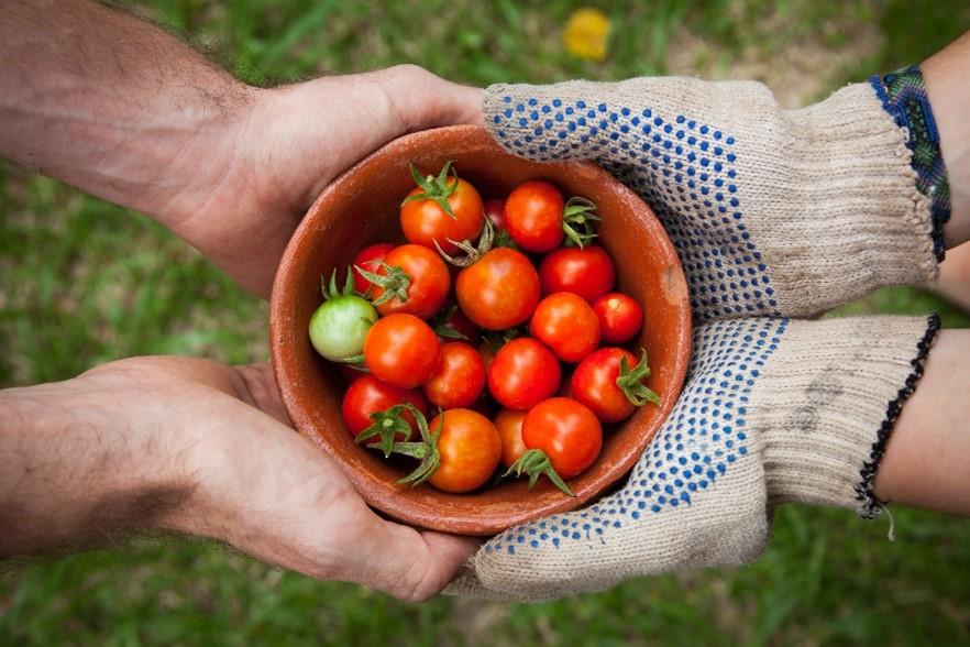 EdiCitNet kicks off the #EdibleCitySolutions campaign to raise awareness about green urban food innovation