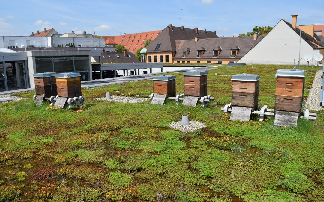 Urban Farming on Buildings should become more popular – We can support you!