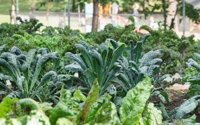 Tilskudd til urbant landbruk 2020 // Funding for urban agriculture projects 2020