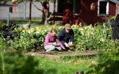 """The City of Oslo joined the """"Food System Change Online Congress"""" in March to present Oslo as a city assuming responsibility for food production."""