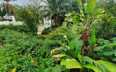 Third technical visit: The rebirth of an Andalusian nourishing garden