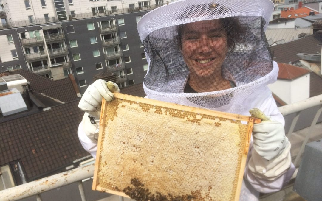 Nabolagshager won silver medal at annual Norwegian Honey Championship