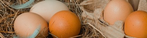 Create_your_ECS_chicken-eggs-4212132