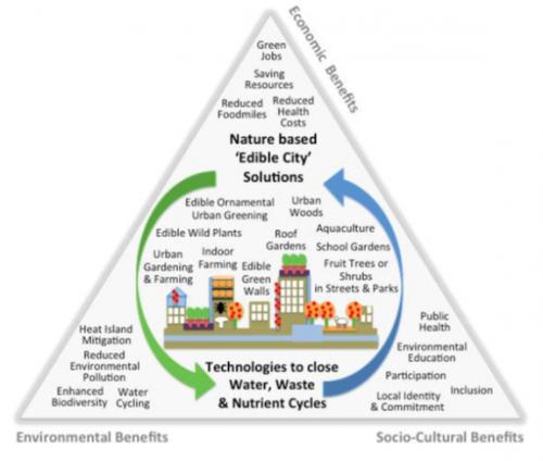 EdiCitNet Triangle