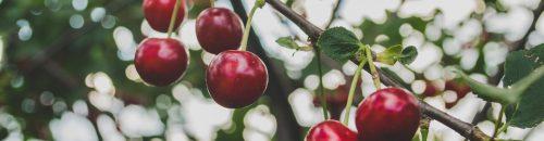 Make_biz_with_ECS_cherries-839864