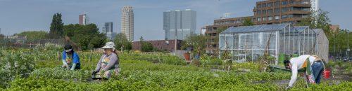 Rotterdam_118_Rdamse_Munt
